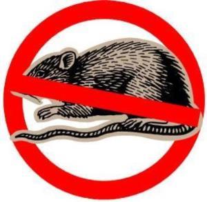 basmi tikus di rumah