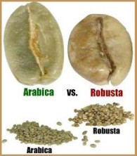 Arabica Or Robusta