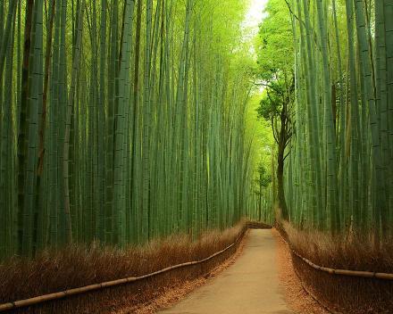 Hutan Bambu Jepang
