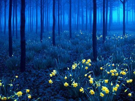 Hutan Hitam, Jerman