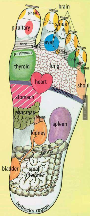 syaraf di telapak kaki